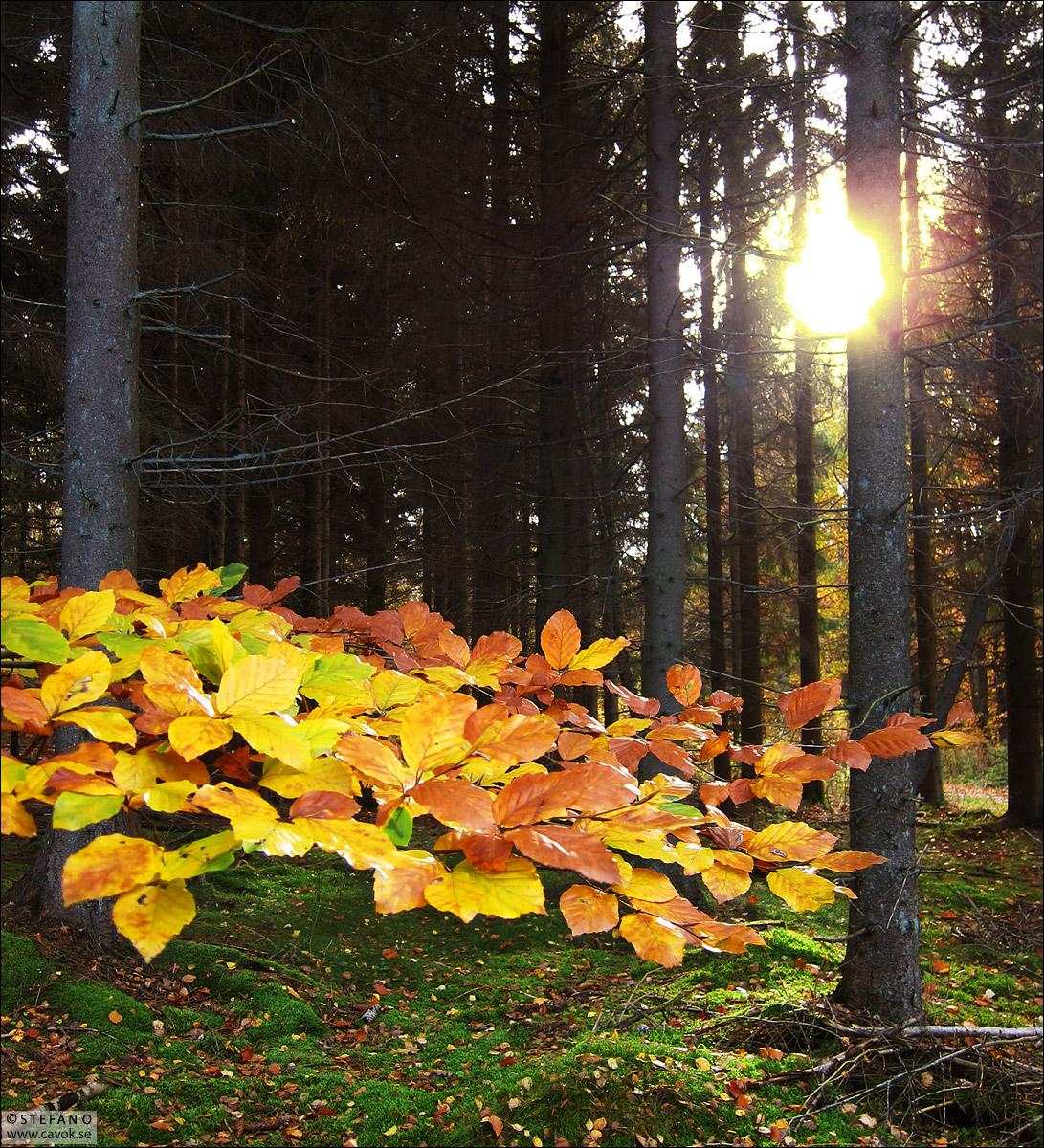 Mellan löv och gran - Skåne.